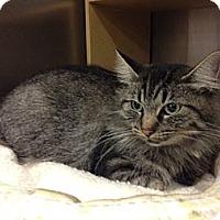 Adopt A Pet :: Edie - Byron Center, MI