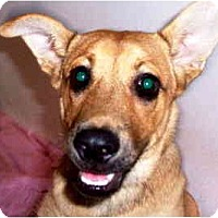 Adopt A Pet :: Sheba - Scottsdale, AZ