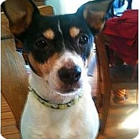Adopt A Pet :: Chloe - Detroit, MI