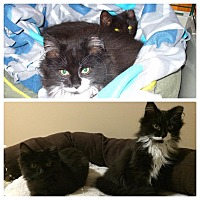 Adopt A Pet :: Vinny and Precious - Halifax, NS