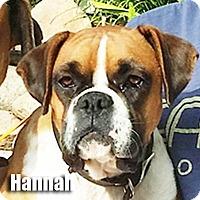 Adopt A Pet :: Hannah - Encino, CA