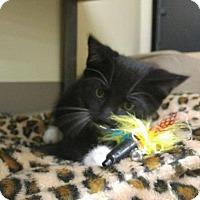 Adopt A Pet :: Matt - Balto, MD