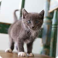 Adopt A Pet :: Baker - San Antonio, TX