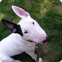 Adopt A Pet :: Lana - San Jose, CA