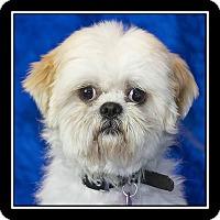 Adopt A Pet :: Dominick - San Diego, CA