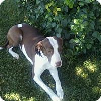 Adopt A Pet :: Cory - Ogden, UT