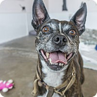 Adopt A Pet :: Buckley - Seattle, WA