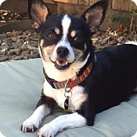 Adopt A Pet :: Eddie - Vacaville, CA