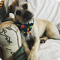 Adopt A Pet :: Ripley - Grand Rapids, MI