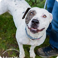 Adopt A Pet :: Pebbles - Ringwood, NJ