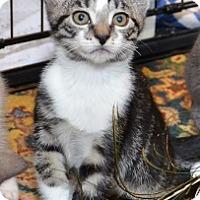Adopt A Pet :: Jag - Davis, CA