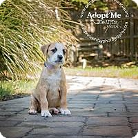 Adopt A Pet :: Lexi - Marlton, NJ