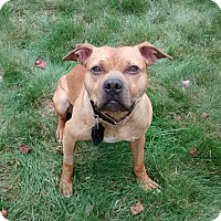 Adopt A Pet :: Eastwood (Woody) - Cranston, RI
