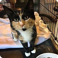 Adopt A Pet :: Alice - Berkley, MI