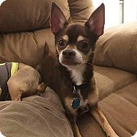 Adopt A Pet :: Cocoa - Riverview, FL