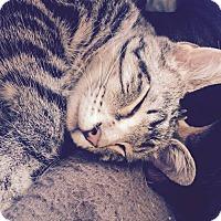 Adopt A Pet :: Chester - Wichita, KS