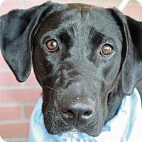 Adopt A Pet :: Lexi - Clovis, CA