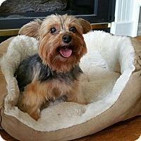 Adopt A Pet :: Ariel 3411 - Toronto, ON