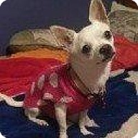 Adopt A Pet :: TWIGGY - Hampton, VA
