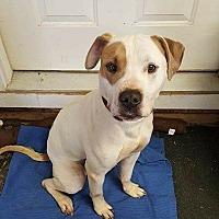 Adopt A Pet :: Zane - Lakeville, MN