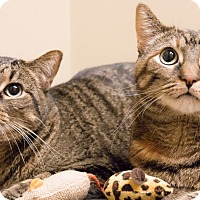 Adopt A Pet :: Tori and Tabitha - Chicago, IL