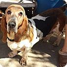 Adopt A Pet :: Rosemarie