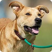 Adopt A Pet :: Barney - Providence, RI