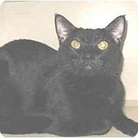 Adopt A Pet :: Zumie - Mesa, AZ