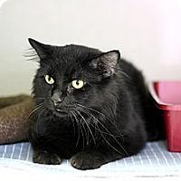 Adopt A Pet :: Cudi - Chicago, IL