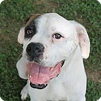 Adopt A Pet :: Sid - ARDEN, NC