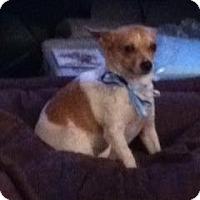 Adopt A Pet :: Buddy - Seattle, WA