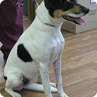 Adopt A Pet :: Christa - Manning, SC
