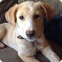 Adopt A Pet :: Yaya - Homewood, AL