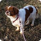 Adopt A Pet :: Paula