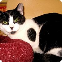 Adopt A Pet :: Shirley - Colmar, PA