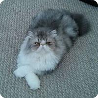 Adopt A Pet :: Sammy - Davis, CA