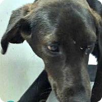 Adopt A Pet :: Larry - Kimberton, PA