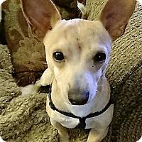 Adopt A Pet :: Chappas~Adoption Pending - Davenport, IA