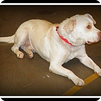 Adopt A Pet :: Camo - Indian Trail, NC