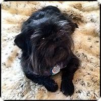 Adopt A Pet :: BARNEY FIFE - ADOPTION PENDING - Seymour, MO