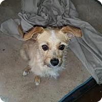 Adopt A Pet :: Tutu - San Antonio, TX