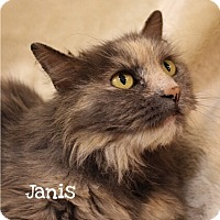 Adopt A Pet :: Janis - Foothill Ranch, CA