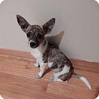 Adopt A Pet :: Tucker - Studio City, CA