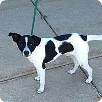 Adopt A Pet :: Baines - Plainfield, IL