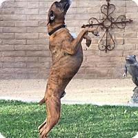 Adopt A Pet :: Magnus - Phoenix, AZ