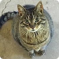 Adopt A Pet :: Little Joe - Rochester, NY