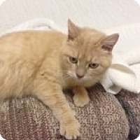 Adopt A Pet :: Clemintine - McHenry, IL