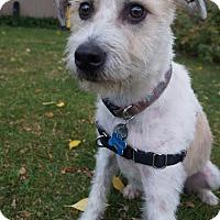 Adopt A Pet :: Nobby D1443 - Shakopee, MN