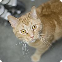 Adopt A Pet :: Sam - Fremont, NE