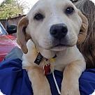 Adopt A Pet :: Sweet Happy - Adoption Pending